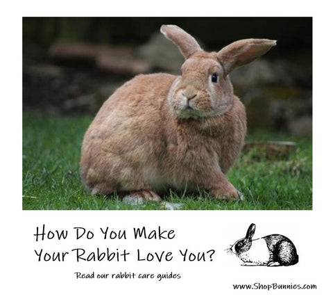 How do you make your rabbit love you?