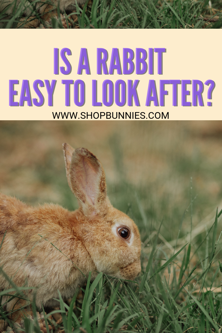 looking after your rabbit a guide