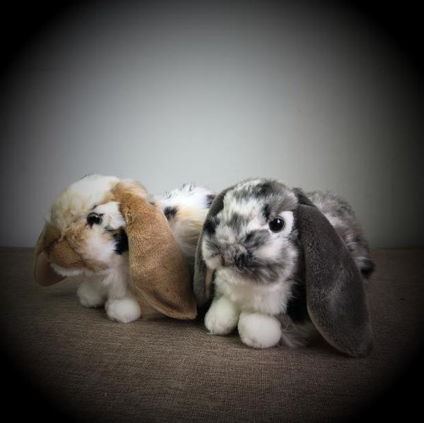 Holland Lop Soft Stuffed Plush Kids Toys