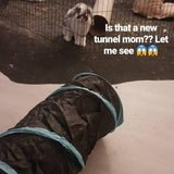 Rabbit Play Tunnel