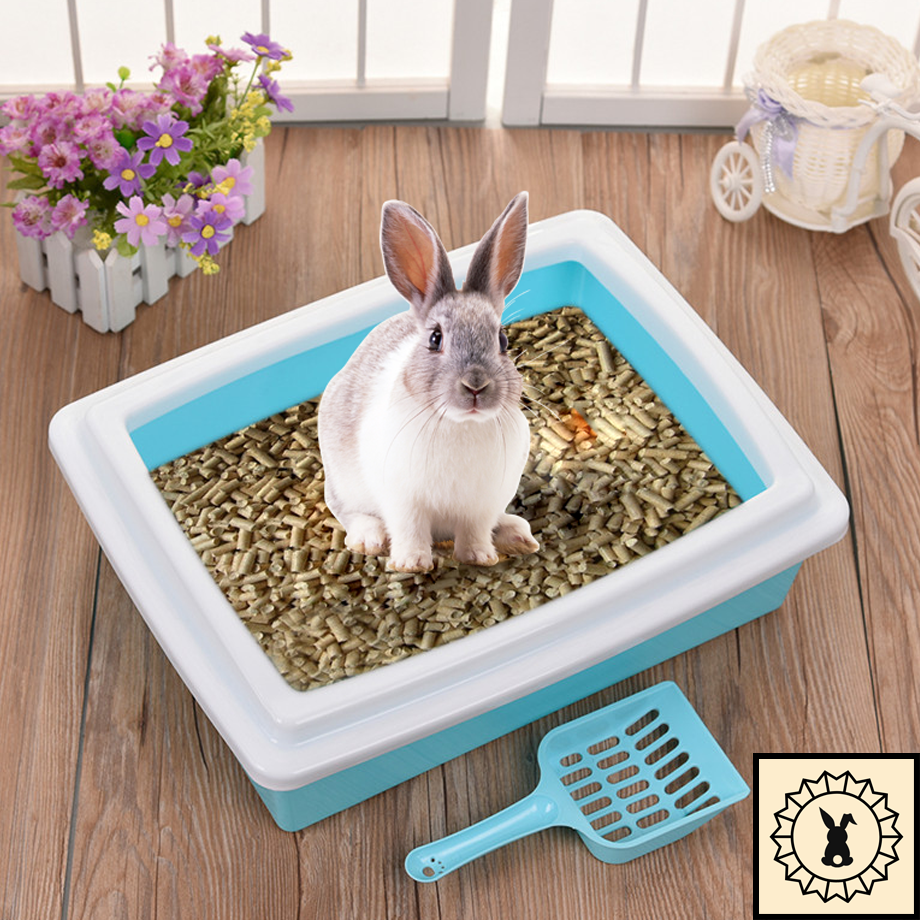 House rabbit litter training box