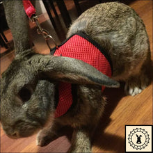 Load image into Gallery viewer, Rabbit Leash + Harness. Large.