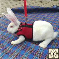 Rabbit Leash + Harness. Medium.