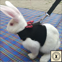 Rabbit Leash + Harness. Small.