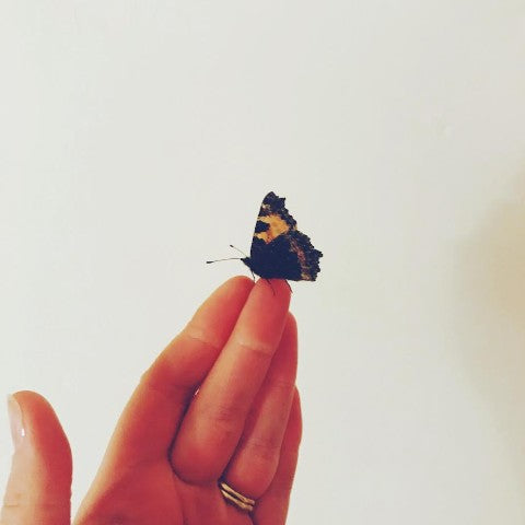Wings | A poem by Lucy Beckley