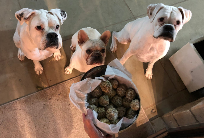 Doggy Daily Bliss Balls