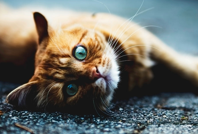 10 simple wellness tips that will have your cat purring