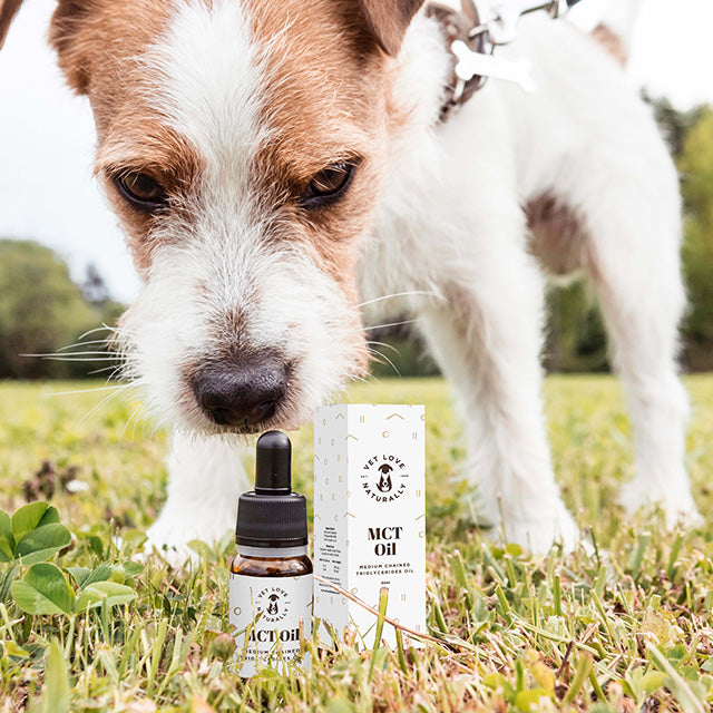 Dog sniffing a Vet Love Naturally MCT Oil.