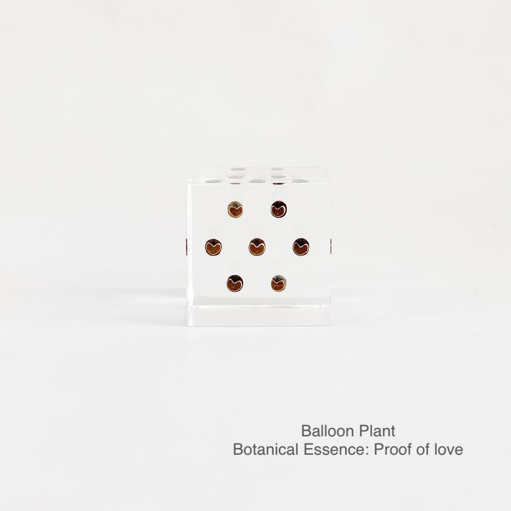 Balloon Plant with Botanical Essence: Proof of Love