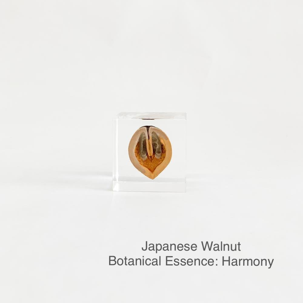 Japanese Walnut with Botanical Essence: Harmony