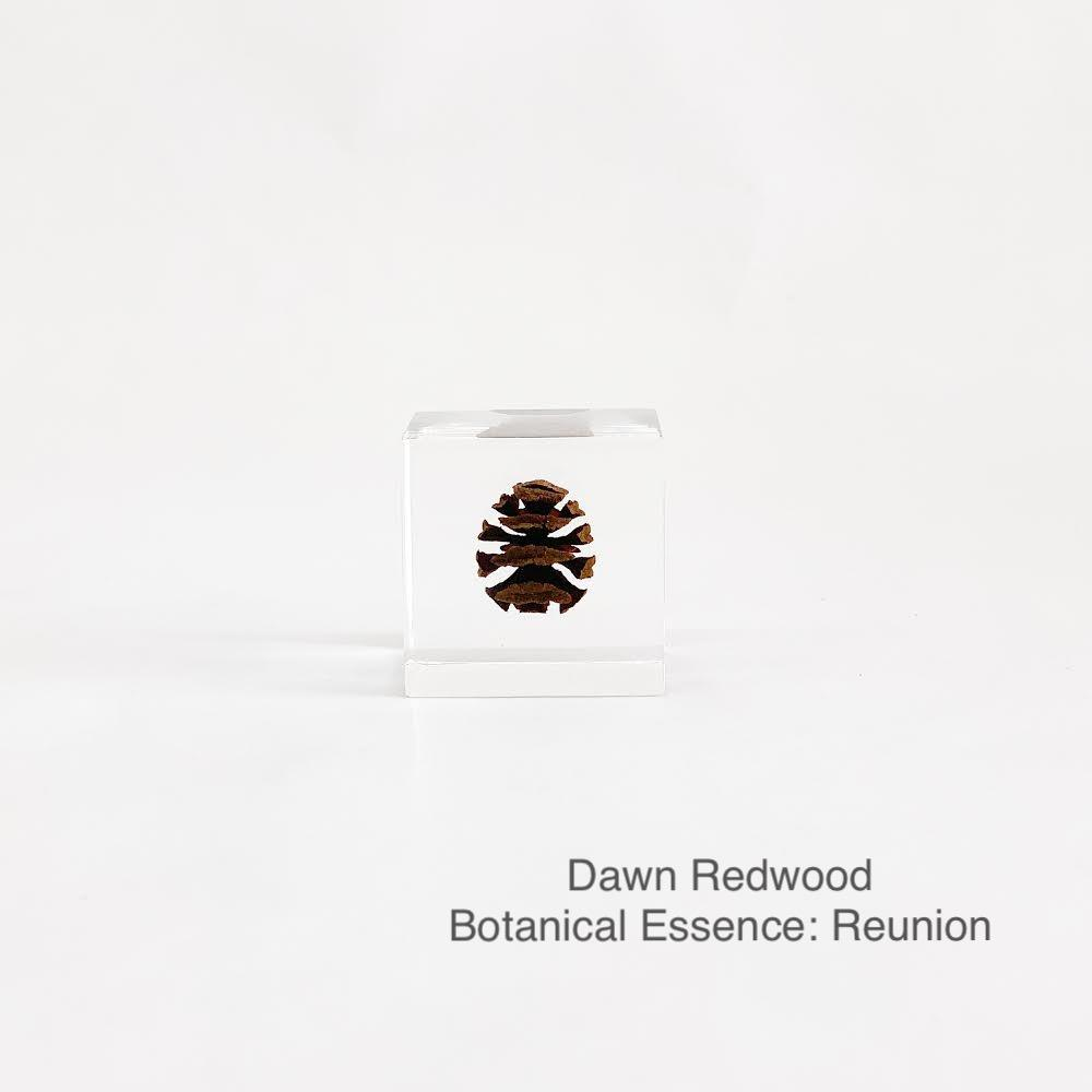 Dawn Redwood with Botanical Essence: Reunion