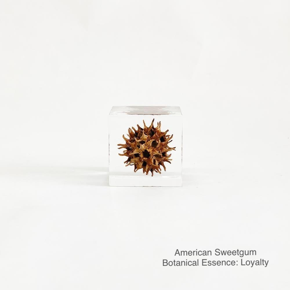 American Sweetgum with Botanical Essence: Loyalty