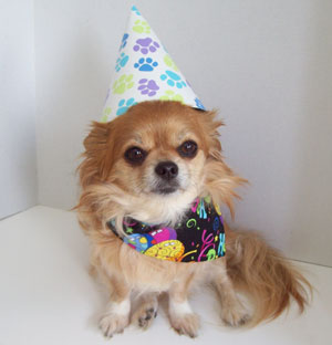 Birthday Club at Natural Pawz