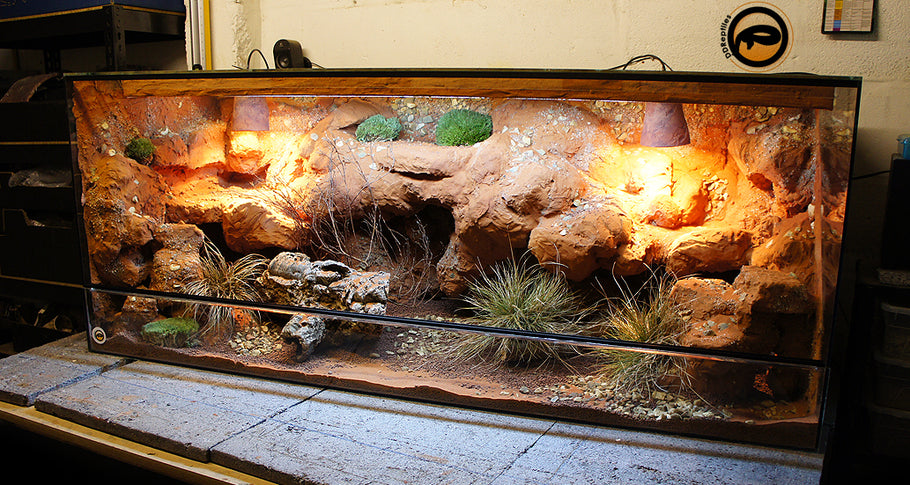 Bearded Dragon Enclosures - Top 5 Guides