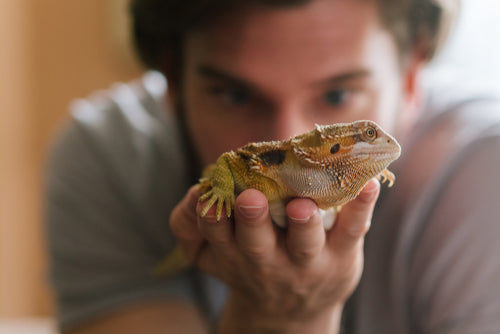 Handling A Bearded Dragon - Top 3 Tips