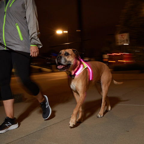 LightHound Illuminated Harness - Run Republic