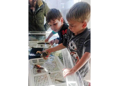 Kids learning about salmon and the ocean at DIPAC Macauley Salmon Hatchery in Juneau, Alaska