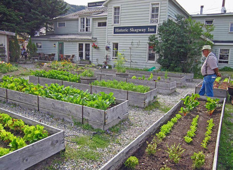 The Historic Skagway Inn's culinary garden grows lettuce and herbs every summer