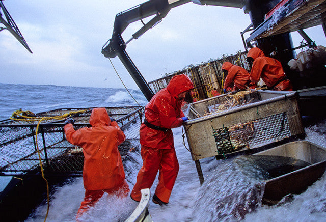 king crab fishing in the Berring Sea