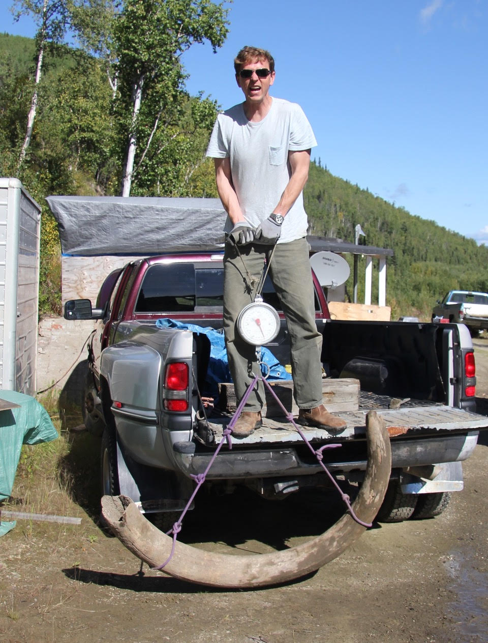 Bruce Schindler weighing a mammoth tusk he excavated in the Yukon