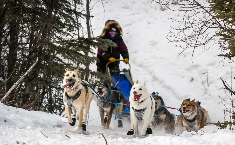Ryne Olson mushing her dogs near Two Rivers, Alaska
