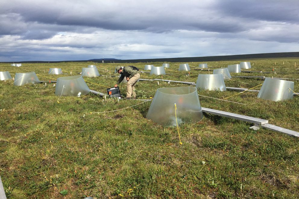 Toolik research base growing plants during the Arctic summer
