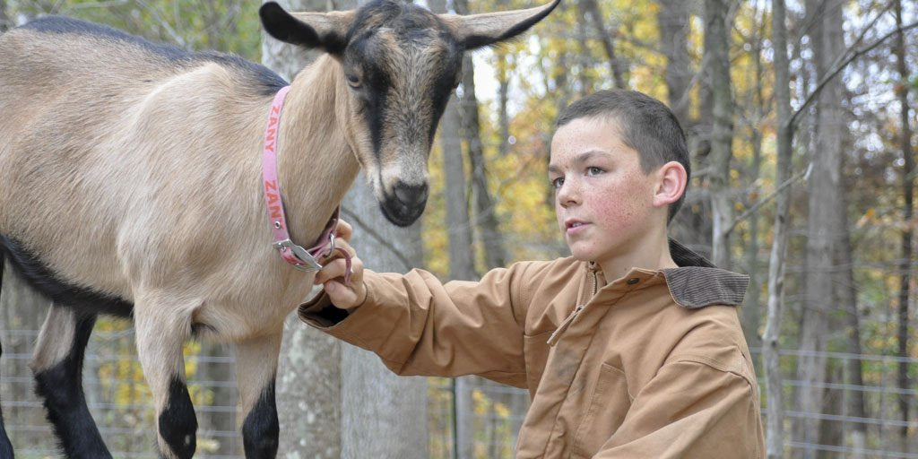 Even Kids Can Raise Alpine Dairy Goats