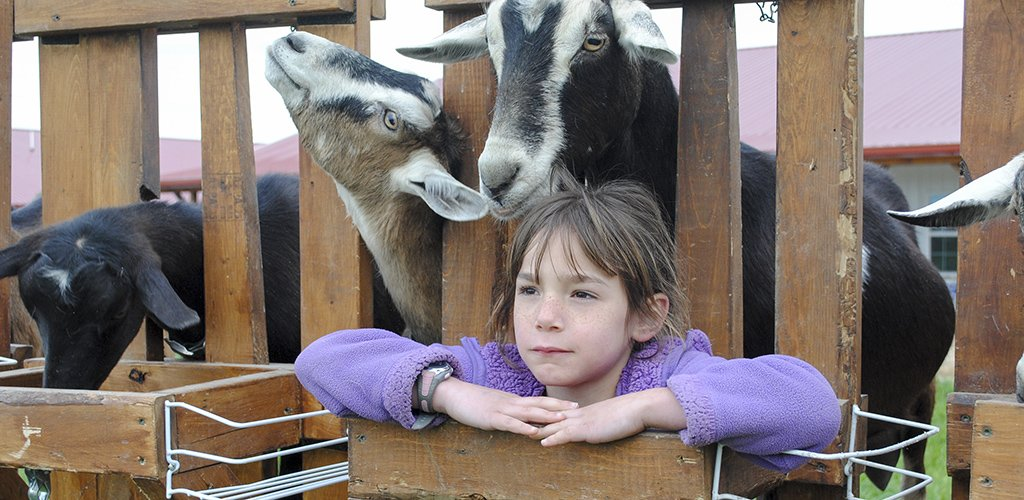 Keeping Dairy Goats Healthy