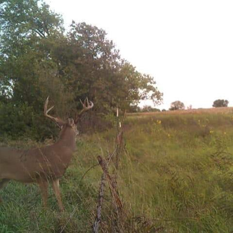 Whitetail Hunt Kansas