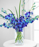 Fantastic Blue Orchids