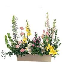 TF199-8 Spring Window Box
