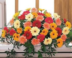 TF 202-4 Gerbera Casket Spray