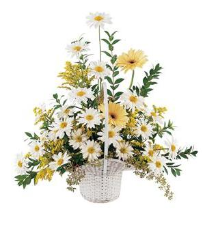 TF221-4 Daisies & Yellow Gerberas