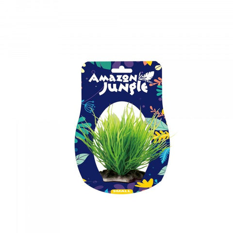 Amazon Jungle Spike Grass 10-12cm