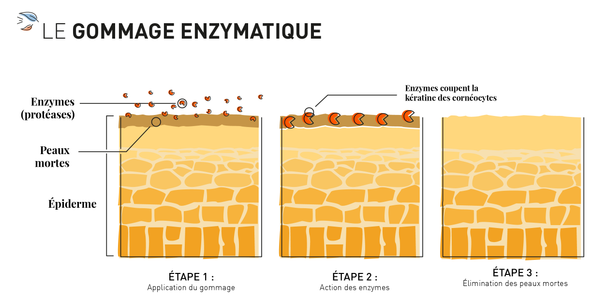 infographie gommage enzymatique