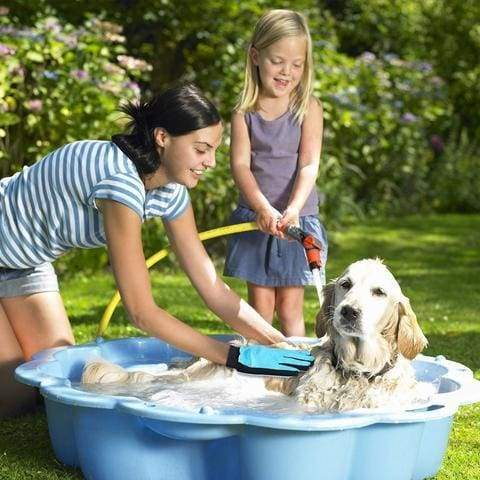 How to bathe your dog? The Best Tips When Bathing Your Dog