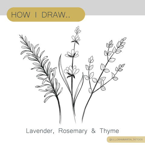 How to draw lavender rosemary and thyme tutorial on patreon,