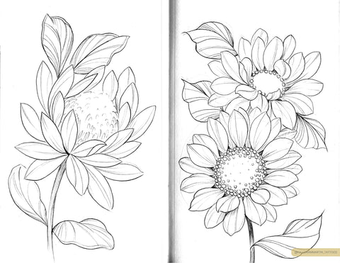 protea and sunflower sketches