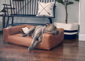 pitbull on brown leather dog couch in stylish setting