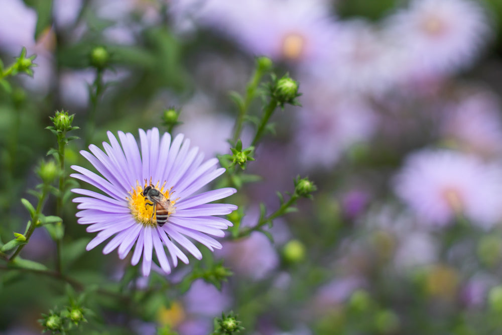 One Surprising Way Pesticides Are Affecting Bees