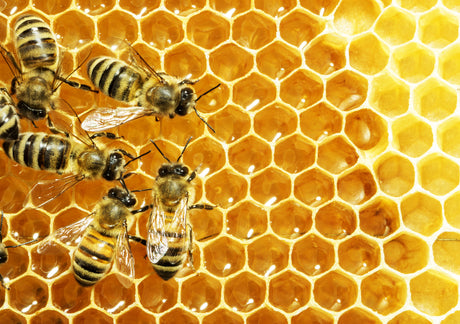 9 Ways Large & Small to Help Save Honey Bees