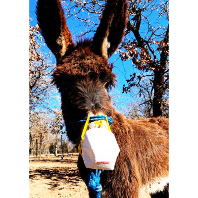Flu survival tips from the Donkey Dairy