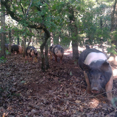 50% Deposit to reserve 1/2 of a Forested Hog: GMO Free, Antibiotic Free, Organic Fed