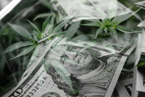 Cannabis Trends for Growing & Consumers