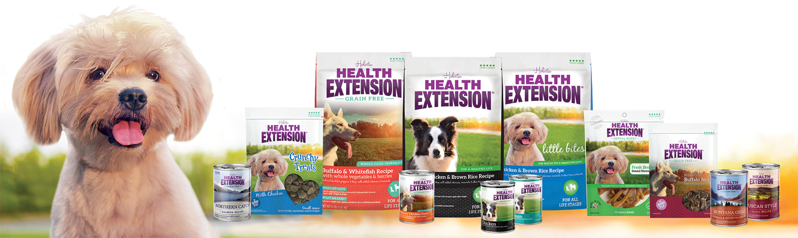 Health Extensions brand banner