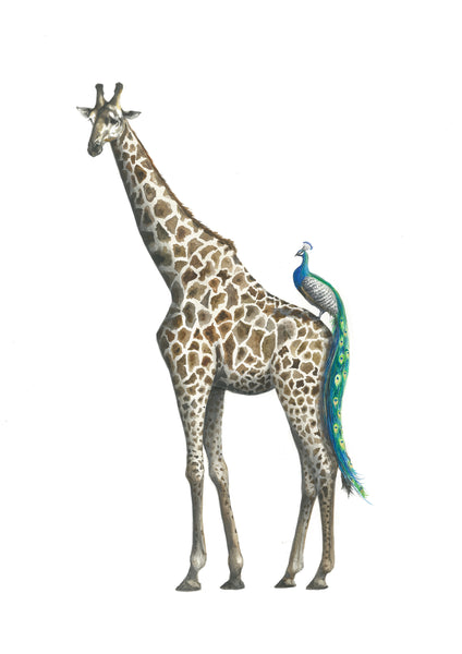 Giraffe and Peacock - Muriel and George Print