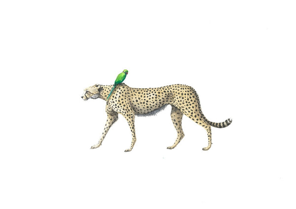 Cheetah and Parrot - Linford and Pandora Print
