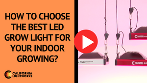 Best LED Grow Lights | California LightWorks