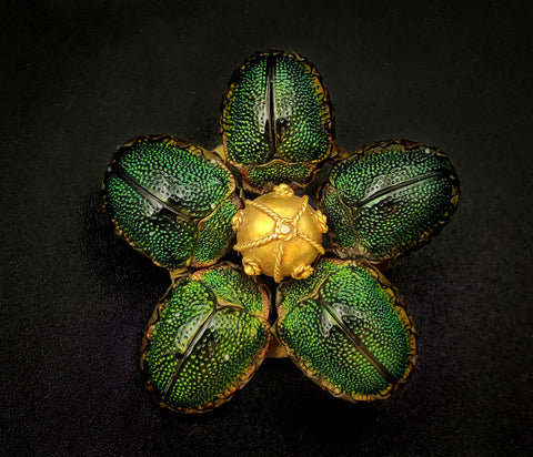 Real Irridescent Scarabs Etruscan Revival Brooch