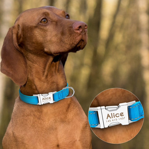 Personalized Blue Dog Collar with Metal Buckle